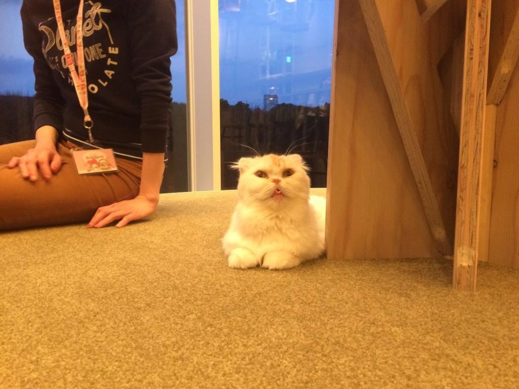 Cat Big